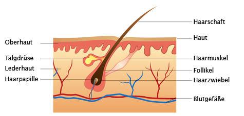 Das Shampoo gegen den Haarausfall mit dem Keratin